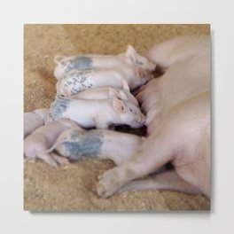 Piglet Lunch Metal Print