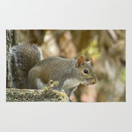 Squirrel Rug
