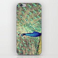 Pretty as a Peacock iPhone & iPod Skin