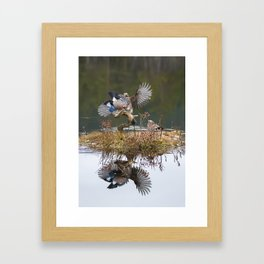 Jay reflections Framed Art Print
