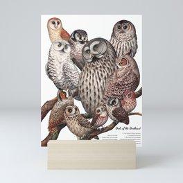 Owls of the Northeast Mini Art Print