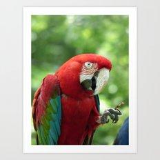 parrot 2015  Art Print