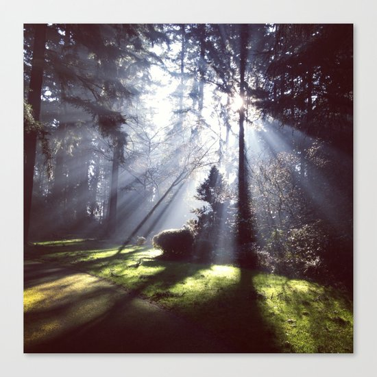 Sun rays through trees Canvas Print