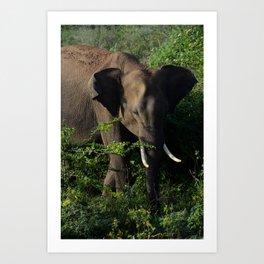 Elephant in Udawalawe National Park Art Print