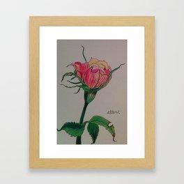 rose, botanical, botanical art, pink, pink rose, Yokohama Framed Art Print