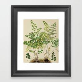 Maidenhair Ferns Framed Art Print