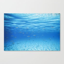School of Fish Swimming over Sand Bottom in the Tropical Sea Canvas Print