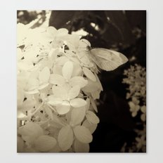 Petal Wings Canvas Print
