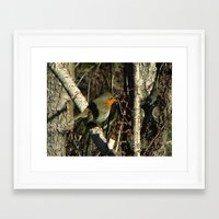 robin Framed Art Prints featuring robin by giol's