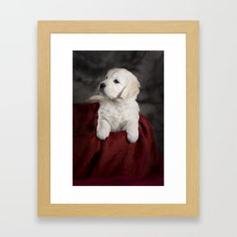 Labrador puppy Framed Art Print