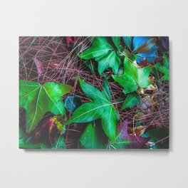 closeup green leaves on the dry grass Metal Print