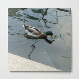 Duck! Metal Print