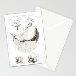 Human Anatomy Art Print STOMACH gastroenterologists Vintage Anatomy, doctor medical art, Antique Stationery Cards