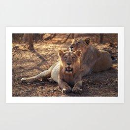 Asiatic Lion 6, Gir Forest, Gujrat, India Art Print