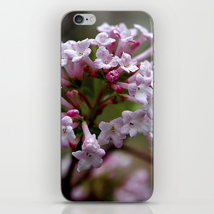 Beautiful Spring Blossoms - Koreanspice Viburnum iPhone Skin