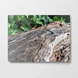 Co-Creating with Dragonfly Metal Print