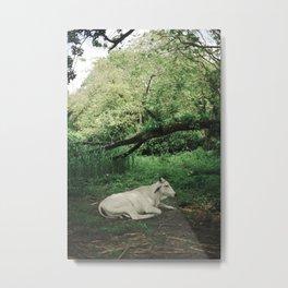 The White Bull Metal Print
