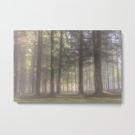 Mistycal autumn in the forest - North Kessock, The Highlands, Scotland Metal Print