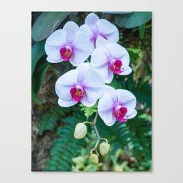 Thai Orchids Canvas Print