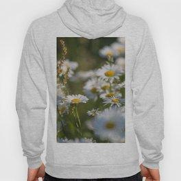Daisies meadow in the summer Hoody
