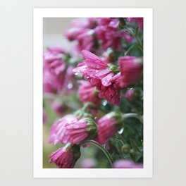 Raindrops on Flowers Art Print