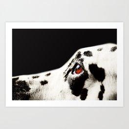 The Amber Eye. Kokkie. Dalmation Dog Art Print
