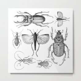 Vintage Beetle black and white drawing Metal Print