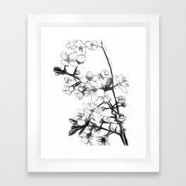 Cherry Blossoms Minimal Drawing Framed Art Print