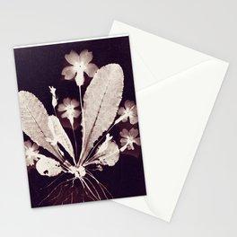 Botanical Photogram 2 Stationery Cards