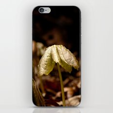 Natures Little Umbrella  iPhone & iPod Skin