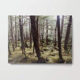 Tree gathering | Nature Photography Metal Print