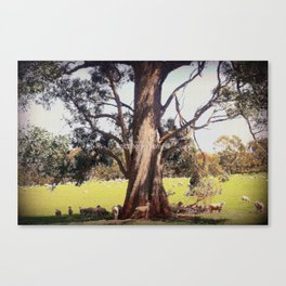 Under the shade of a coolabah Tree Canvas Print