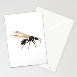 Black Winged garden ant species lasius niger Stationery Cards