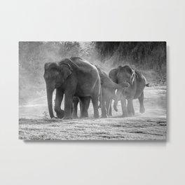 Asian Elephants | Minneriya National Park | Sri Lanka Metal Print