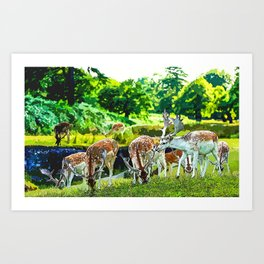 Herd of Deer Art Print