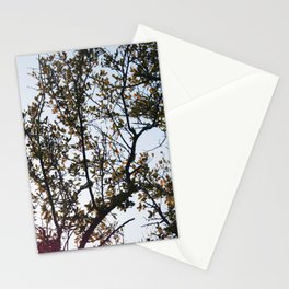 West Texas Stationery Cards