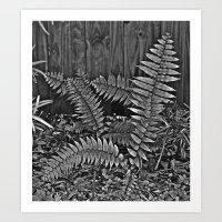 Fern II Art Print