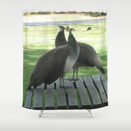 Peafowl on table Shower Curtain