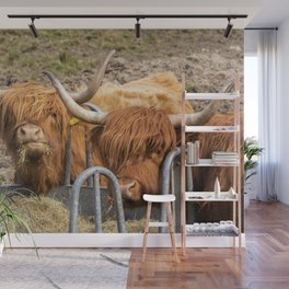 Funny Eating ginger Scottish Highland cows Wall Mural