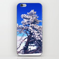 Snow covered trees iPhone & iPod Skin