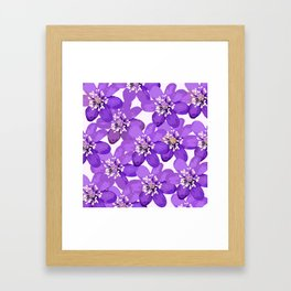 Purple wildflowers on a white background - spring atmosphere Framed Art Print