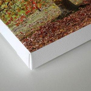 Sun Lit Tree Lined Avenue in Autumn Canvas Print