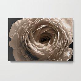 Sepia Toned Ranunculus Flower Metal Print
