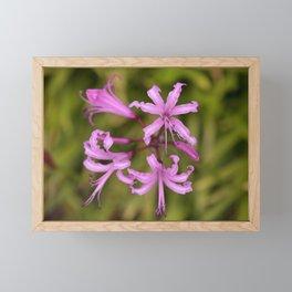 Floral Anemones Framed Mini Art Print