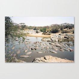 Hippo Pool Canvas Print