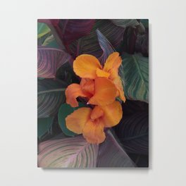 Cana Lily Metal Print