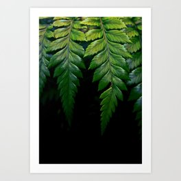Hanging Fern Art Print