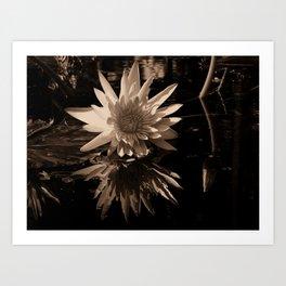 A lily Art Print