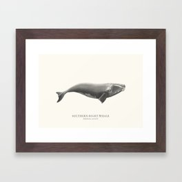 Southern Right Whale Framed Art Print