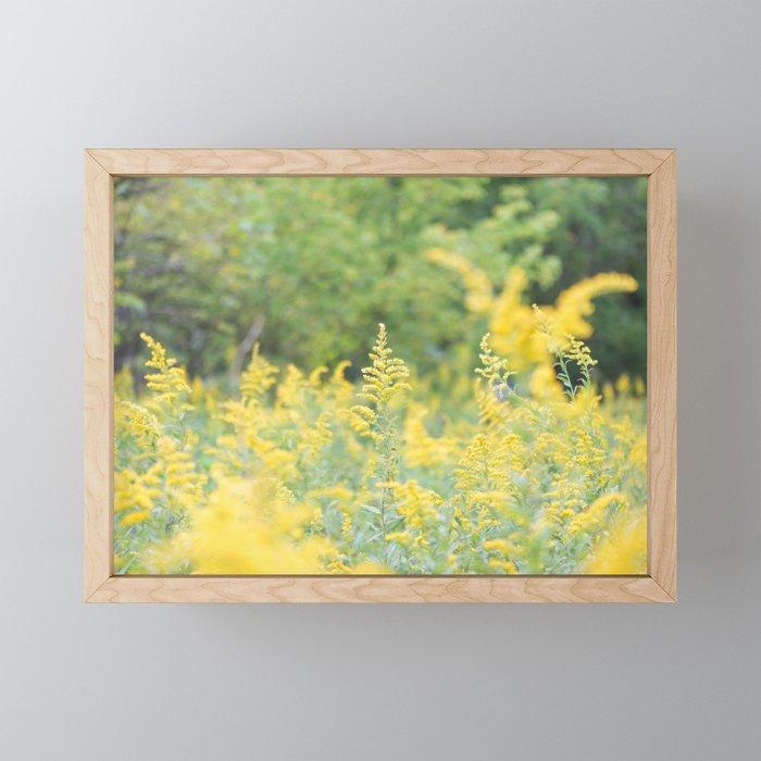 Field of Goldenrod Framed Mini Art Print